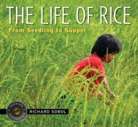 Life of Rice: From Seedling to Supper