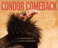 scientists in the field condor comeback