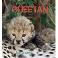 Cheetah  (Eye on the Wild)