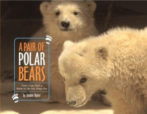 Pair of Polar Bears   Twin Cubs Find a Home at the San Diego Zoo