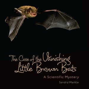 Case of the Vanishing Little Brown Bats: A Scientific Mystery