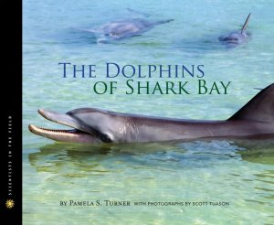 dolphins of shark bay_hres.jpg