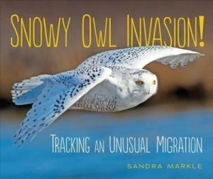 Snowy Owl Invasion! Tracking An Unusual Migration