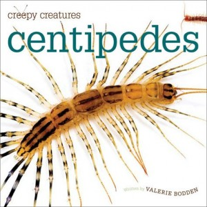 Centipedes: Creepy Creatures