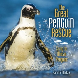 Great Penguin Rescue: Saving the African Penguins